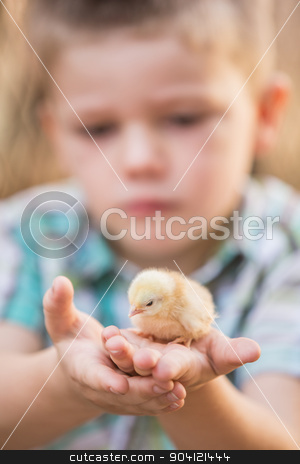 Child with Baby Bird in Palm stock photo, Small yellow chick in palms of serious child by Scott Griessel