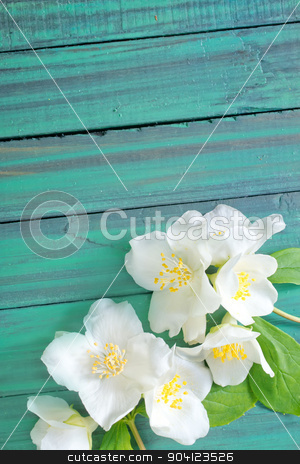 flowers stock photo, flowers by tycoon