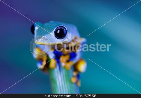 Exotic frog in indonesia, Rhacophorus reinwardtii on colorful ba stock photo, Exotic frog in indonesia, Rhacophorus reinwardtii on colorful background by Sebastian Duda