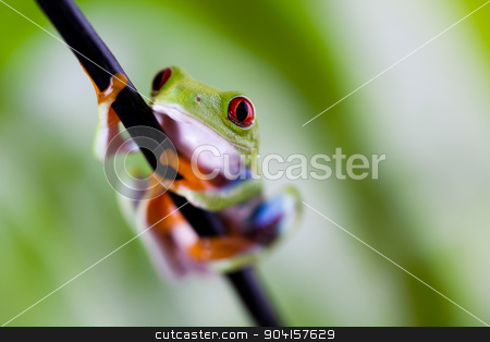 Tree frog on colorful background stock photo, Tree frog on colorful background by Sebastian Duda