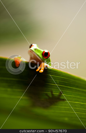 Exotic frog on colorful background stock photo, Exotic frog on colorful background by Sebastian Duda