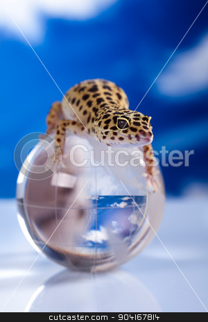 Gecko reptile, Lizard, bright colorful vivid theme stock photo, Gecko reptile, Lizard, bright colorful vivid theme by Sebastian Duda