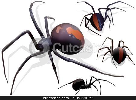 Black Widow Spider stock photo, Black Widow Spider (Latrodectus hasselti) - Illustration by derocz