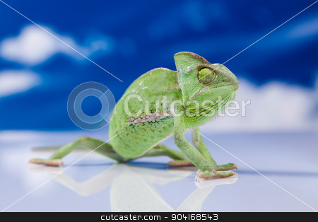 Chameleon on the blue sky, bright vivid exotic climate stock photo, Chameleon on the blue sky, bright vivid exotic climate by Sebastian Duda