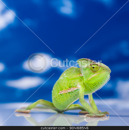 Chameleon on the blue sky, bright vivid exotic climate stock photo, Chameleon on the blue sky, bright vivid exotic climate by Sebastian Duda