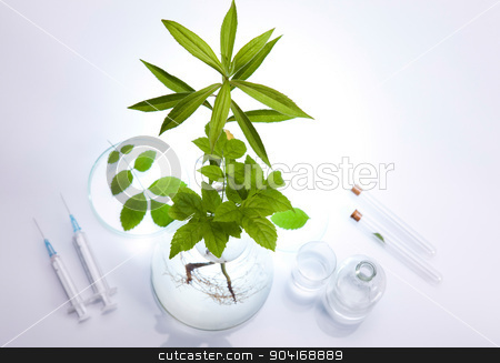 Laboratory glassware, genetically modified plant stock photo, Laboratory glassware, genetically modified plant by Sebastian Duda