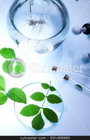 Science experiment with plant laboratory stock photo, Science experiment with plant laboratory by Sebastian Duda