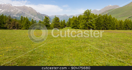 Italian Alps stock photo, Wonderful view on Italian Alps with a forest background during a summer day. Piedmont region - North Italy. by Paolo Gallo