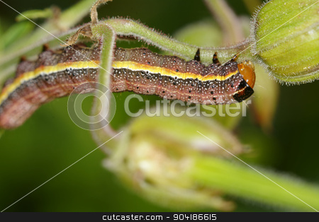 Colorful caterpillar stock photo, Colorful brown yellow caterpillar on the flower. by neryx