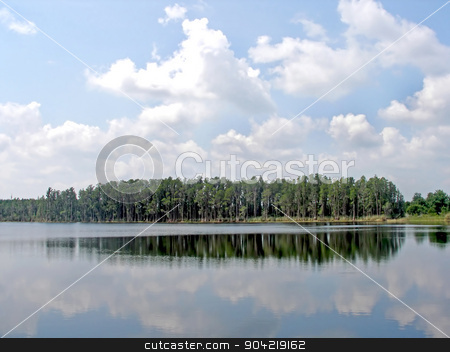 Forest Reflections stock photo, A forest next to a lake with reflections in the water by Lucy Clark