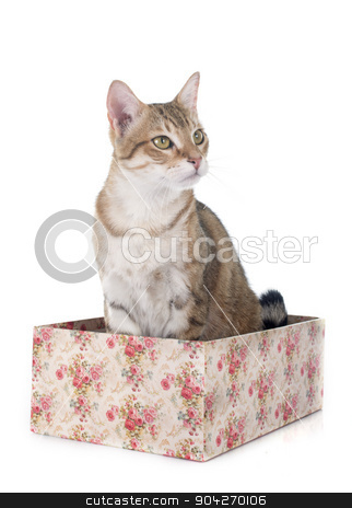 tabby cat stock photo, tabby cat in front of white background by Bonzami Emmanuelle