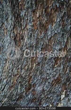 pims_20070729_ml0025.JPG stock photo, Close-up of a tree bark, Mysore, Karnataka, India by imagedb