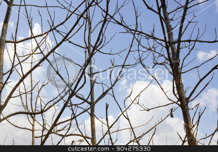 pims_20100527_ml0241.jpg stock photo, Low angle view of bare trees, Jim Corbett National Park, Nainital, Uttarakhand, India by imagedb