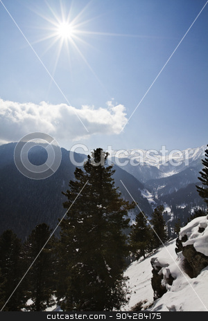 Trees on a snow covered mountain, Kashmir, Jammu And Kashmir, In stock photo, Trees on a snow covered mountain, Kashmir, Jammu And Kashmir, India by imagedb