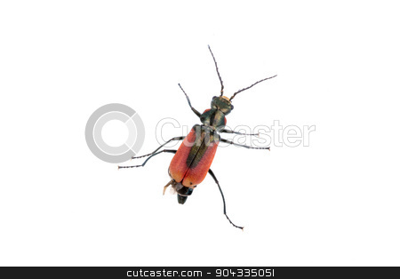 Red black bug on a white background stock photo, Red black bug isolated on a white background by neryx