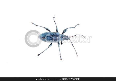 Blue bug on a white background stock photo, Blue bug isolated on a white background by neryx