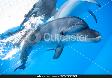 Dolphin swims under the water stock photo, Dolphin swims under the water and looking at the camera by bezikus