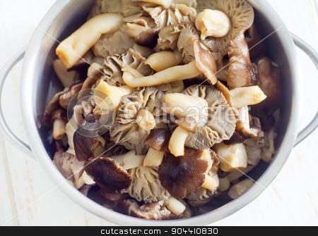 mushrooms stock photo, mushrooms by tycoon