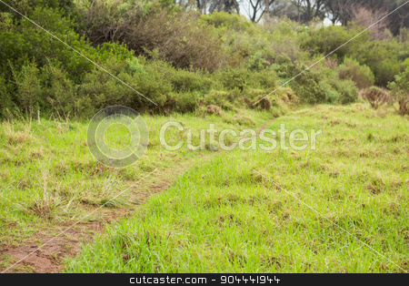 Image of a greenness hiking path stock photo, Image of a beautiful greenness hiking path by Wavebreak Media