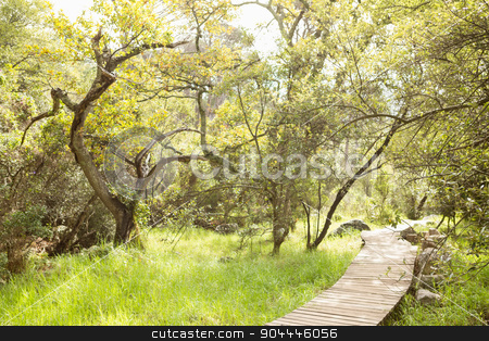 Wooden trail across countryside stock photo, Wooden trail across countryside in the nature by Wavebreak Media