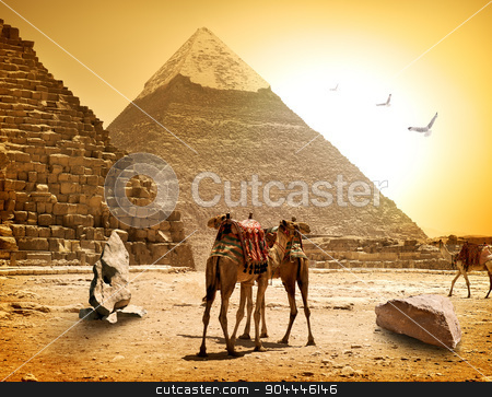 Camels and pyramids stock photo, Camels and pyramids at the hot sunny evening by Givaga