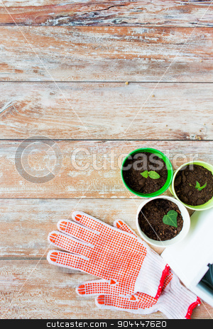close up of seedlings and garden gloves stock photo, gardening and planting concept - close up of seedlings, garden gloves on table by Syda Productions