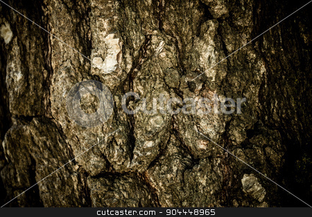 Wooden texture stock photo, A close-up shot made to a tree by Roland Valentin Raicu
