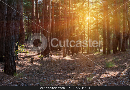 Forest stock photo, Beautiful scene in the forest with sun rays and shadows by olinchuk