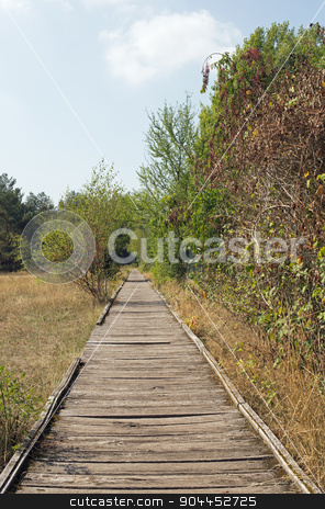 Planks way stock photo, Planks way, nature reserve Schwanheimer dune, Hesse, Germany by Harry Huber