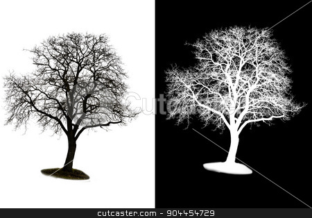 tree with alpha mask stock photo, A isolated winter tree with alpha mask by p.studio66