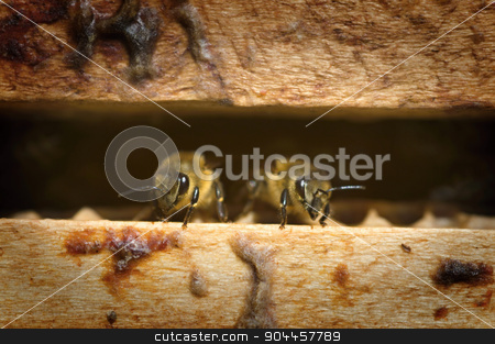Bees in a beehive stock photo, Two bees in a beehive - detail by Digifoodstock