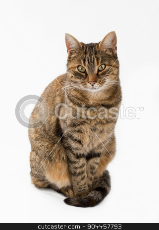 Stray cat stock photo, Portrait of a stray cat - isolated by Digifoodstock