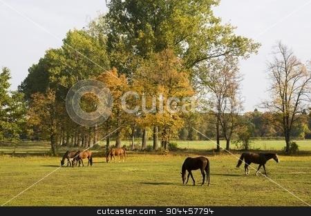 Horses grazing stock photo, Horses grazing  by Digifoodstock
