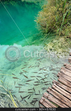 Fishes in clear water of Plitvice Lakes, Croatia stock photo, Fishes in extremely clear water of Plitvice Lakes, Croatia by Serghei Starus