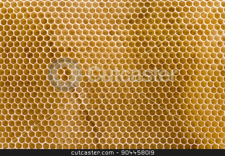 Honeycomb  stock photo, Honeycomb  by Digifoodstock
