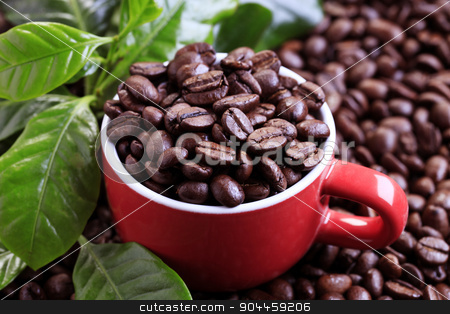 Coffee beans stock photo, Roasted coffee beans in a red cup by Digifoodstock
