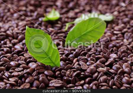 Coffee beans stock photo, Coffee beans and fresh leaves - closeup by Digifoodstock