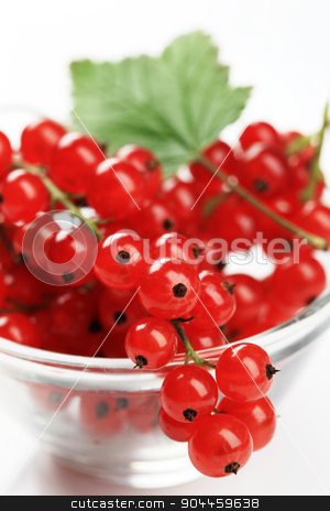 Red currant stock photo, Sprigs of fresh red currant in a bowl by Digifoodstock
