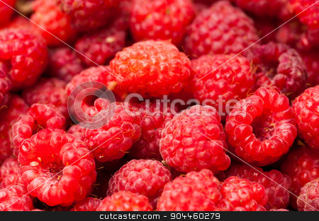 sweet raspberry fruit stock photo, A beautiful selection of freshly picked ripe red raspberries by Aikon