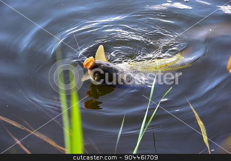 Catching carp bait in the water close up stock photo, Catching carp fishing rod with a hook and fishing line in the water close up by AlisLuch