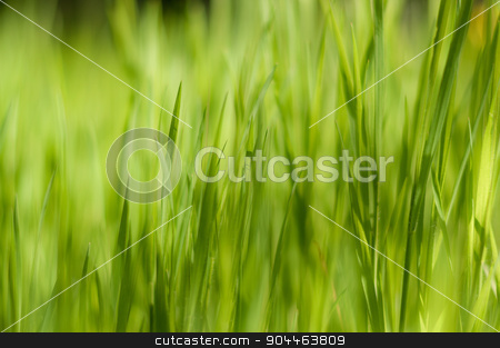 Close up of fresh thick grass with boken stock photo, Background of a green grass by Francesco