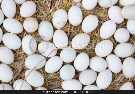 White eggs on a hay. stock photo, White eggs on a hay beeing sold at a local farm market. by kasto