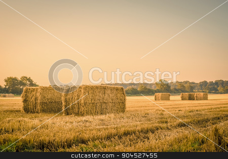 Harvested straw bales on a countryside stock photo, Harvested straw bales on a countryside field by Kasper Nymann