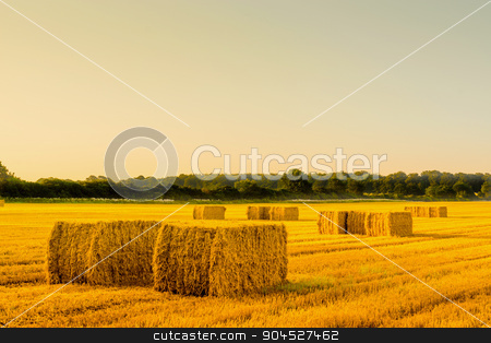 Straw bales in a countryside landscape stock photo, Straw bales in a countryside landscape in the morning by Kasper Nymann