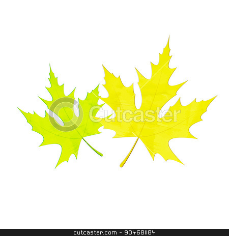two leaves stock vector clipart, green and yellow maple leaves isolated on white background. vector design by metrue