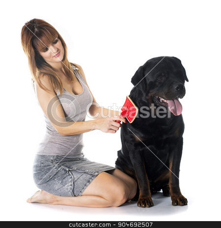 young woman and rottweiler stock photo, young woman brushing her rottweiler in front of white background by Bonzami Emmanuelle