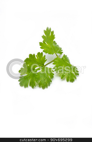 fresh coriander (cilantro) herb isolated on a white background. stock photo, Fresh coriander (cilantro) herb isolated on a white background. by Sirikorn Techatraibhop