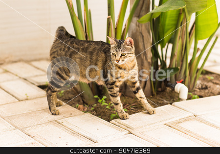 Beautiful  cat in the garden stock photo, Beautiful funny cat in the garden. cat in the yard by Satura86