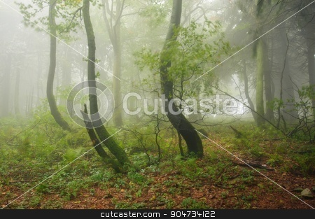 Misty forest stock photo, Mysterious green old forest with fog and rain by Ondrej Vladyka