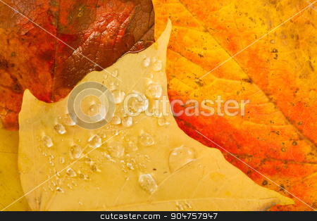 Leaves Fallen Winter Nature Ground Autumn Season Change Dew Drop stock photo, Dew drops appear overnight on leaf ground cover by Christopher Boswell